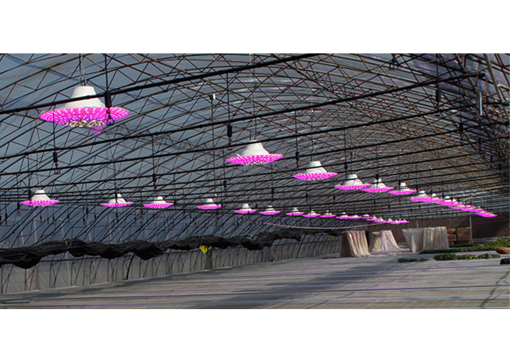 China's shanxi juxin weiye greenhouse LED light supplement project